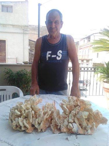 https://www.ragusanews.com//immagini_articoli/29-08-2019/pesa-solo-4-chili-e-un-fungo-di-carrubo-500.jpg