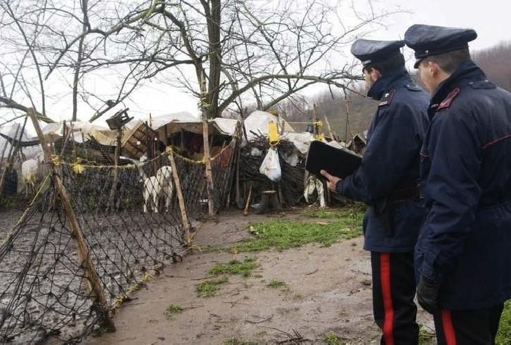 http://www.ragusanews.com//immagini_articoli/29-10-2015/pascolo-abusivo-e-discarica-controlli-dei-carabinieri-500.jpg