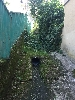 http://www.ragusanews.com//immagini_articoli/29-12-2016/acqua-piovana-riesce-defluire-terrazzino-allagato-100.jpg