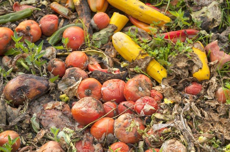 https://www.ragusanews.com//immagini_articoli/30-01-2018/frutta-marcia-posto-lingotto-doro-tentata-truffa-avola-500.jpg