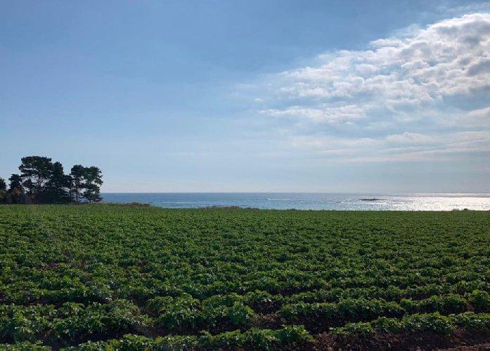 https://www.ragusanews.com//immagini_articoli/30-01-2020/patate-novelle-siracusano-la-produzione-cresce-500.jpg