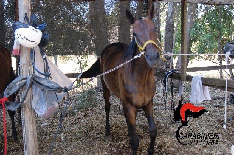 https://www.ragusanews.com//immagini_articoli/30-07-2018/scoglitti-bloccata-corsa-clandestina-cavalli-500.jpg