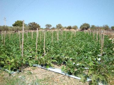 https://www.ragusanews.com//immagini_articoli/30-07-2021/l-agricoltura-in-estate-non-va-in-vacanza-280.jpg