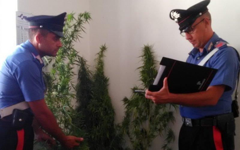 https://www.ragusanews.com//immagini_articoli/30-08-2019/lo-sciclitano-con-la-serra-in-casa-di-droga-500.jpg
