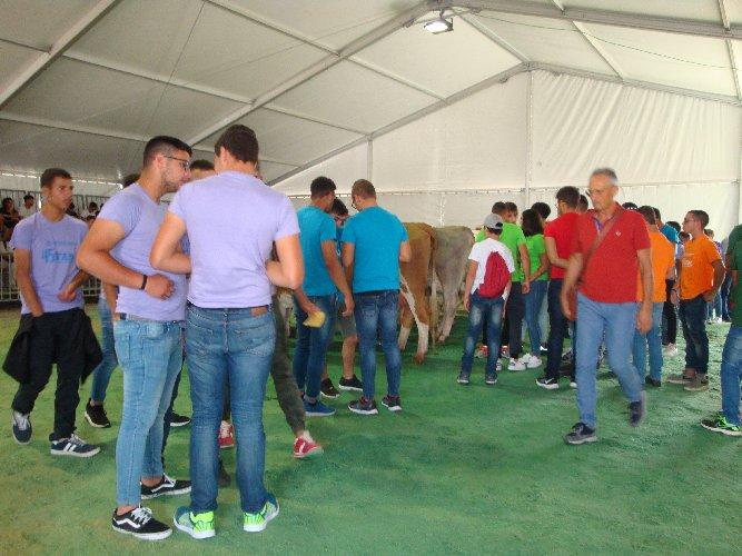 https://www.ragusanews.com//immagini_articoli/30-09-2019/1569830341-le-scuole-agrarie-fiera-agricola-di-ragusa-1-500.jpg