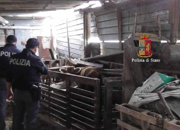 http://www.ragusanews.com//immagini_articoli/30-10-2015/sequestrata-azienda-zootecnica-abusiva-500.jpg