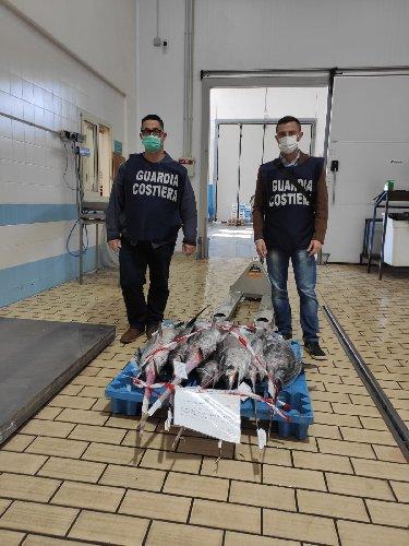 https://www.ragusanews.com//immagini_articoli/30-10-2020/il-pescespada-sotto-misura-tra-pozzallo-malta-e-scoglitti-500.jpg