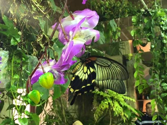 https://www.ragusanews.com//immagini_articoli/30-11-2016/modica-riapre-la-casa-delle-farfalle-420.jpg