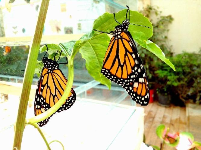 http://www.ragusanews.com//immagini_articoli/31-05-2017/modica-giugno-chiude-casa-farfalle-500.jpg