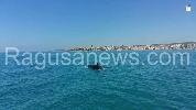 http://www.ragusanews.com//immagini_articoli/31-07-2017/giocano-delfini-mare-sampieri-100.jpg