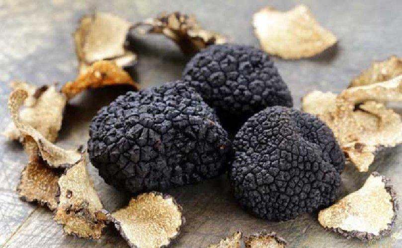 https://www.ragusanews.com//immagini_articoli/31-07-2019/a-ferla-hanno-un-fiuto-eccezionale-per-il-tartufo-nero-500.jpg