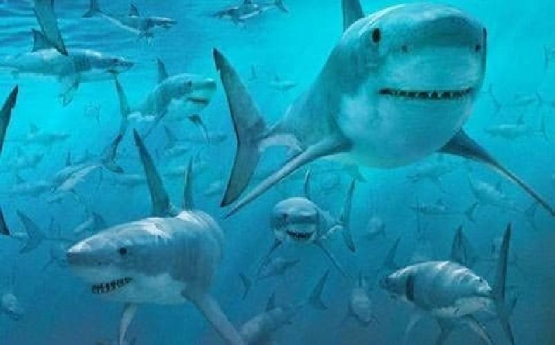 https://www.ragusanews.com//immagini_articoli/31-08-2020/sub-circondato-da-un-branco-di-squali-500.jpg
