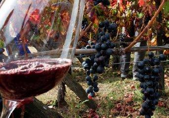 https://www.ragusanews.com//immagini_articoli/31-10-2019/gambero-rosso-i-migliori-vini-siciliani-premiati-con-3-bicchieri-240.jpg
