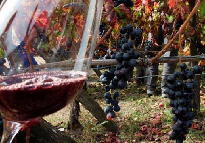 https://www.ragusanews.com//immagini_articoli/31-10-2019/gambero-rosso-i-migliori-vini-siciliani-premiati-con-3-bicchieri-500.jpg