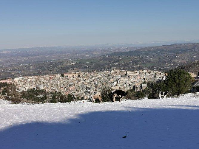 https://www.ragusanews.com//immagini_articoli/31-12-2019/mucche-al-pascolo-in-mezzo-neve-a-chiaramonte-500.jpg