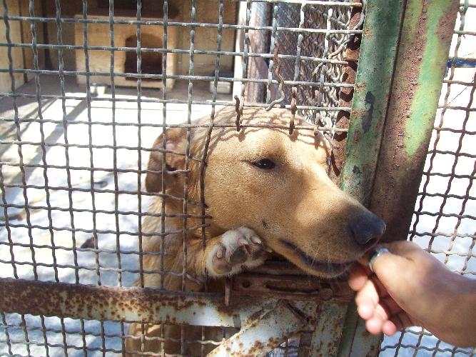 Il canile di chiaramonte i soldi i cani chiaramonte gulfi for Quanto costa mantenere un cavallo