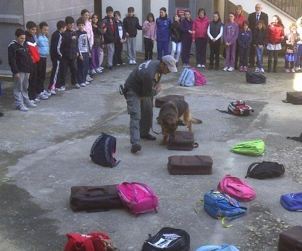 https://www.ragusanews.com/resizer/resize.php?url=https://www.ragusanews.com//immagini_articoli/01-04-2011/1396124317-il-cane-finanziere-itla-fa-lezione-a-scuola-a-ragusa.jpg&size=601x500c0