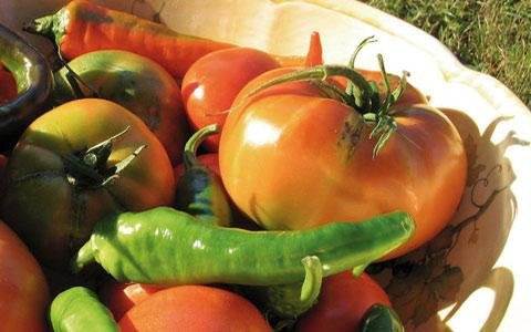 https://www.ragusanews.com/resizer/resize.php?url=https://www.ragusanews.com//immagini_articoli/02-05-2015/1430597250-0-agricoltura-biologica-una-giornata-formativa.jpg&size=800x500c0