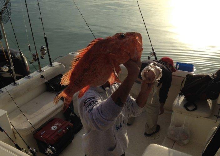 https://www.ragusanews.com/resizer/resize.php?url=https://www.ragusanews.com//immagini_articoli/02-06-2014/1401710653-pesci-grandi-come-coccodrilli-a-marina-di-ragusa.jpg&size=703x500c0