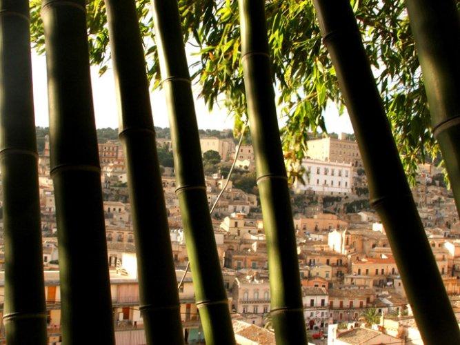 https://www.ragusanews.com/resizer/resize.php?url=https://www.ragusanews.com//immagini_articoli/03-11-2014/1415054021-0-il-giardino-dei-bambu-a-modica.jpg&size=667x500c0