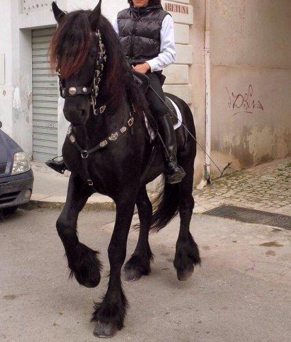 https://www.ragusanews.com/resizer/resize.php?url=https://www.ragusanews.com//immagini_articoli/03-12-2014/1417605631-1-vendo-cavallo-frisone.jpg&size=426x500c0