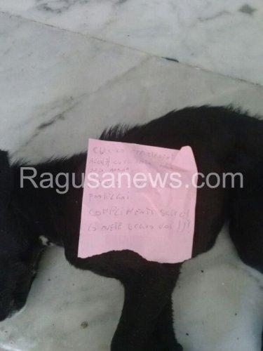 https://www.ragusanews.com/resizer/resize.php?url=https://www.ragusanews.com//immagini_articoli/04-03-2014/1396117812-un-cane-morto-sulle-scale-del-municipio-di-scicli.jpg&size=375x500c0