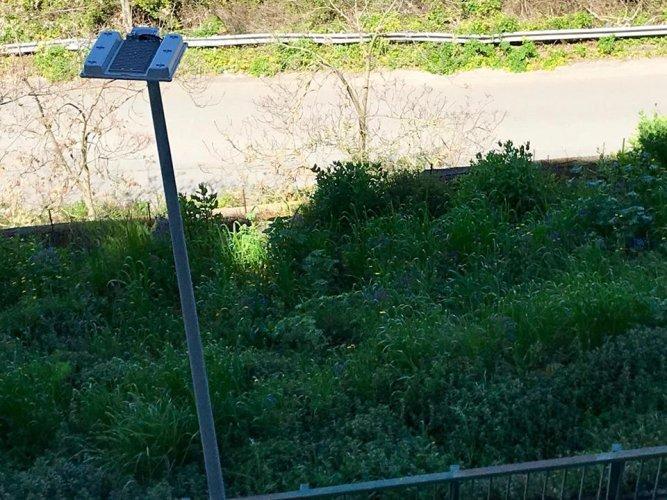 https://www.ragusanews.com/resizer/resize.php?url=https://www.ragusanews.com//immagini_articoli/06-04-2018/1523021160-10-giungla-sterpaglie-corso-kennedy-manca-solo-tarzan-foto.jpg&size=667x500c0