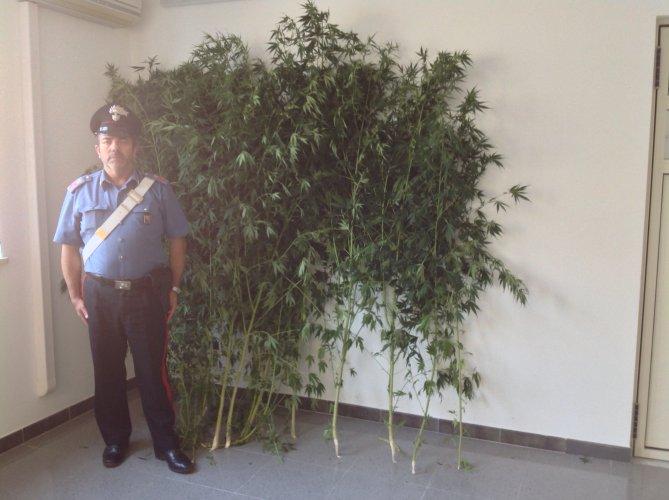 https://www.ragusanews.com/resizer/resize.php?url=https://www.ragusanews.com//immagini_articoli/06-09-2014/1409994079-1-droga-arrestato-francesco-asta.jpg&size=669x500c0