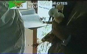 https://www.ragusanews.com/resizer/resize.php?url=https://www.ragusanews.com//immagini_articoli/07-07-2011/1396123863-operazione-corvo-imperiale-il-riesame-conferma-il-sequestro-dei-volatili.jpg&size=798x500c0