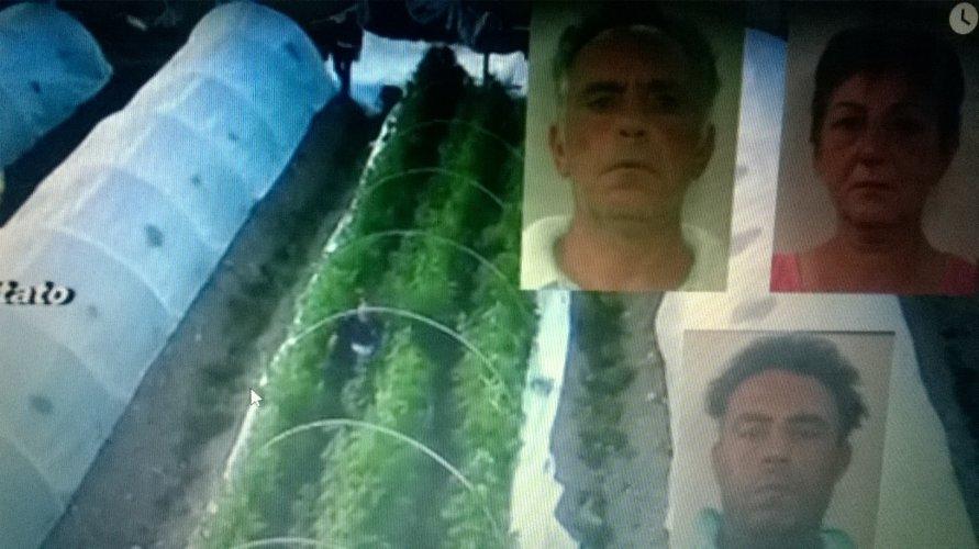 https://www.ragusanews.com/resizer/resize.php?url=https://www.ragusanews.com//immagini_articoli/08-06-2016/1465401422-0-20-mila-piante-di-marijuana-ad-avola-a-capo-c-era-un-vittoriese.jpg&size=891x500c0