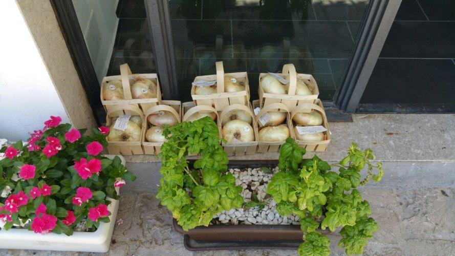 https://www.ragusanews.com/resizer/resize.php?url=https://www.ragusanews.com//immagini_articoli/08-07-2016/1468003579-1-lo-street-food-in-via-mormina-penna.jpg&size=889x500c0