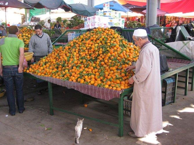 https://www.ragusanews.com/resizer/resize.php?url=https://www.ragusanews.com//immagini_articoli/10-03-2016/1457608741-0-lo-splendido-accordo-ue-marocco-mette-in-ginocchio-la-sicilia.jpg&size=667x500c0