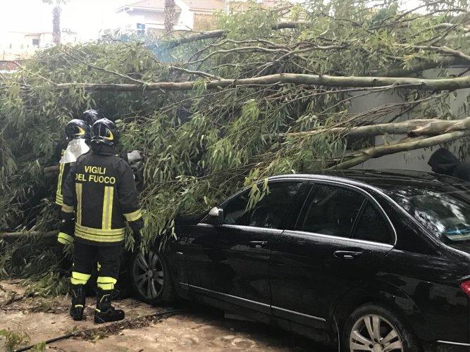 https://www.ragusanews.com/resizer/resize.php?url=https://www.ragusanews.com//immagini_articoli/10-11-2017/1510344538-1-maltempo-ragusa-alberi-abbattuti-scuole-chiuse-serre-divelte.jpg&size=667x500c0