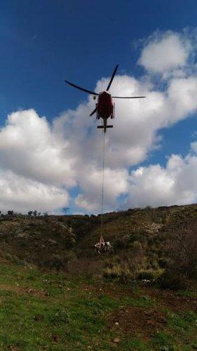 https://www.ragusanews.com/resizer/resize.php?url=https://www.ragusanews.com//immagini_articoli/12-01-2019/1547297892-1-pompieri-recuperano-bovino-caduto-scarpata-elicottero.jpg&size=281x500c0