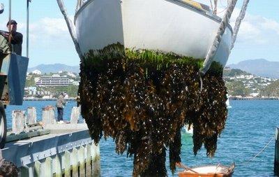 https://www.ragusanews.com/resizer/resize.php?url=https://www.ragusanews.com//immagini_articoli/12-08-2017/1502564695-1-giovane-studioso-ragusano-crostacei-alieni-minacciano-biodiversit.jpg&size=791x500c0