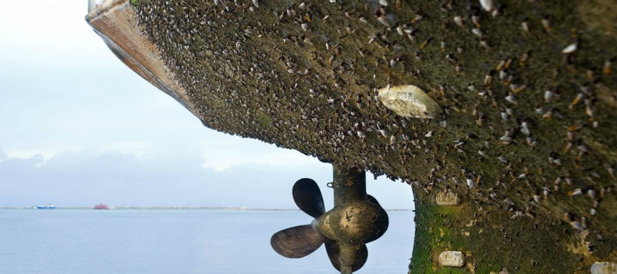 https://www.ragusanews.com/resizer/resize.php?url=https://www.ragusanews.com//immagini_articoli/12-08-2017/1502564695-3-giovane-studioso-ragusano-crostacei-alieni-minacciano-biodiversit.jpg&size=1125x500c0