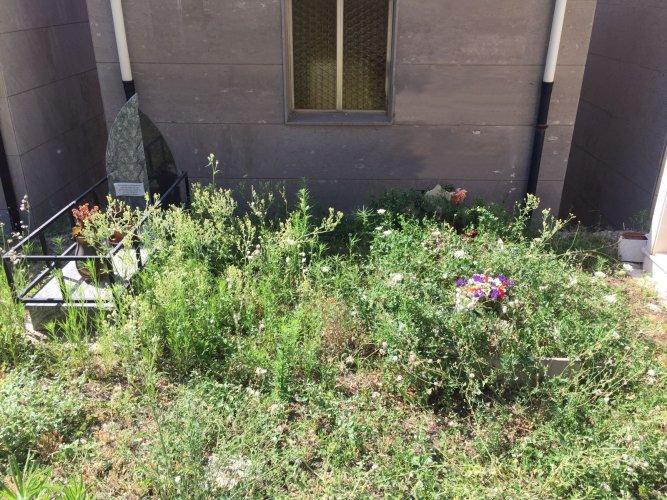 https://www.ragusanews.com/resizer/resize.php?url=https://www.ragusanews.com//immagini_articoli/14-07-2018/1531558224-3-chiaramonte-cimitero-sterpaglie.jpg&size=667x500c0