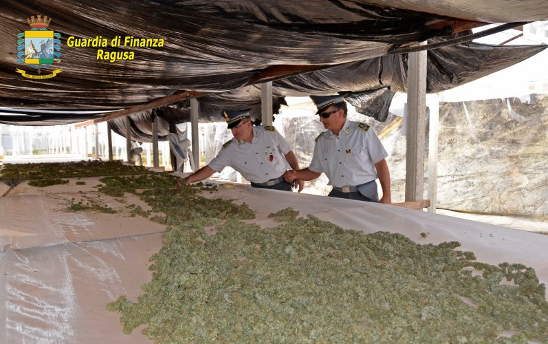 https://www.ragusanews.com/resizer/resize.php?url=https://www.ragusanews.com//immagini_articoli/15-10-2015/1444903672-0-una-bella-piantagione-a-resine-di-droga.jpg&size=797x500c0