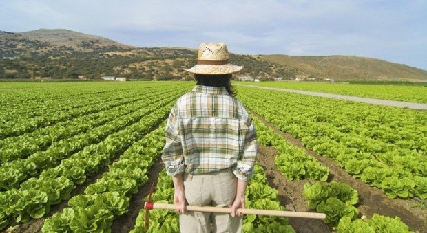 https://www.ragusanews.com/resizer/resize.php?url=https://www.ragusanews.com//immagini_articoli/17-02-2016/1455735790-0-ragusa-prima-per-mafia-in-agricoltura.jpg&size=914x500c0