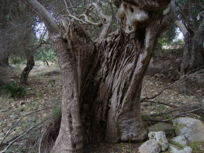 https://www.ragusanews.com/resizer/resize.php?url=https://www.ragusanews.com//immagini_articoli/18-06-2015/1434635320-0-chi-taglia-gli-alberi-a-modica-per-intimidire-chi.jpg&size=667x500c0