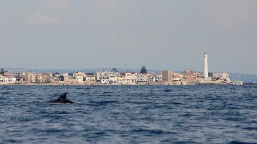 https://www.ragusanews.com/resizer/resize.php?url=https://www.ragusanews.com//immagini_articoli/18-09-2018/1537261163-5-delfini-montalbano-foto.jpg&size=887x500c0