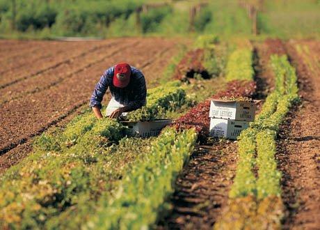 https://www.ragusanews.com/resizer/resize.php?url=https://www.ragusanews.com//immagini_articoli/20-05-2014/1400591403-congresso-uila-e-uimec-a-ragusa-no-al-lavoro-nero-in-agricoltura.jpg&size=697x500c0
