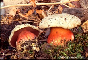 https://www.ragusanews.com/resizer/resize.php?url=https://www.ragusanews.com//immagini_articoli/21-01-2015/1421840441-0-funghi-iblei-se-ne-parla-a-ragusa.jpg&size=736x500c0