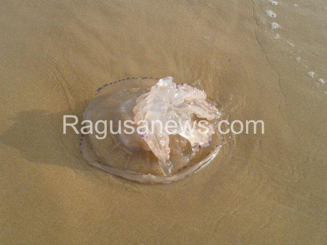 https://www.ragusanews.com/resizer/resize.php?url=https://www.ragusanews.com//immagini_articoli/23-03-2014/1396117648-la-medusa-gigante-a-sampieri.jpg&size=667x500c0