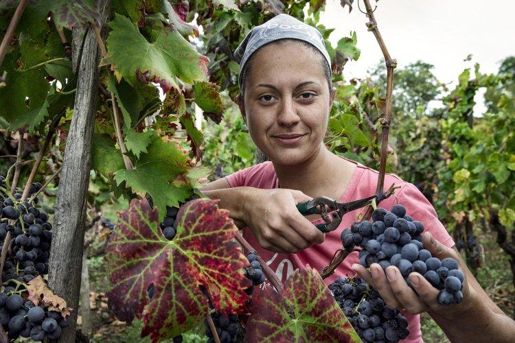 https://www.ragusanews.com/resizer/resize.php?url=https://www.ragusanews.com//immagini_articoli/23-08-2015/1440348582-0-si-presenta-gente-e-vino-dell-etna-concerto-di-davide-di-rosolini.jpg&size=750x500c0