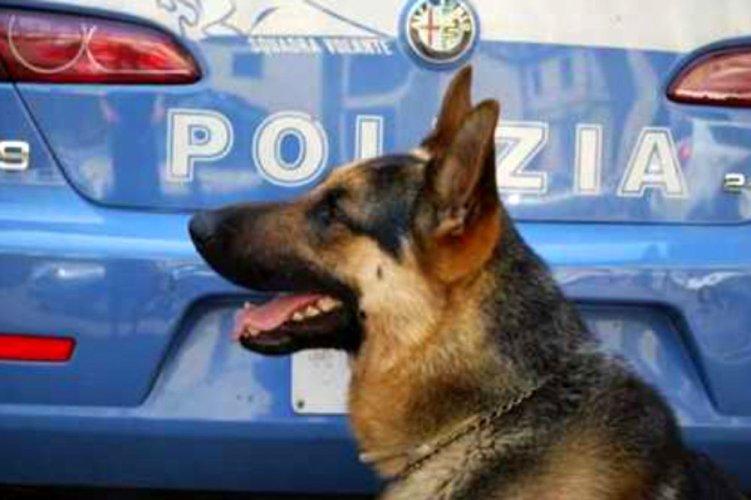 https://www.ragusanews.com/resizer/resize.php?url=https://www.ragusanews.com//immagini_articoli/25-03-2016/1458898575-0-il-rex-della-polizia-trova-droga-nei-centri-accoglienza-migranti.jpg&size=751x500c0