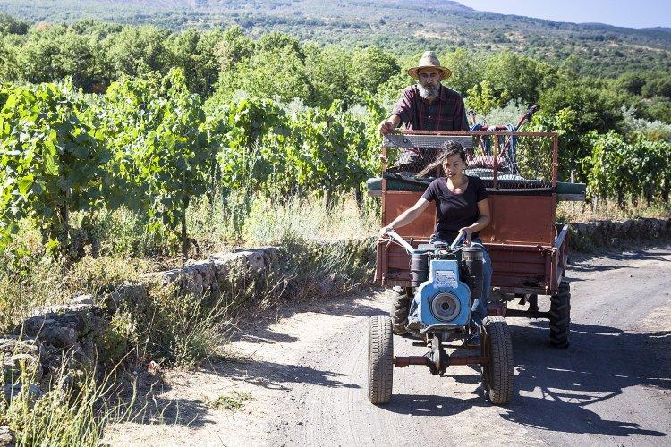https://www.ragusanews.com/resizer/resize.php?url=https://www.ragusanews.com//immagini_articoli/27-10-2015/1445976074-0-rubino-rotte-del-vino-con-rotoletti.jpg&size=750x500c0