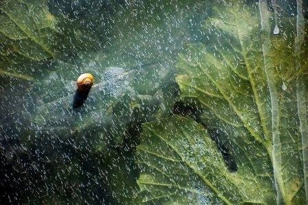 https://www.ragusanews.com/resizer/resize.php?url=https://www.ragusanews.com//immagini_articoli/29-11-2013/1396118561-la-natura-dipinge-nelle-foto-di-gino-taranto.jpg&size=752x500c0